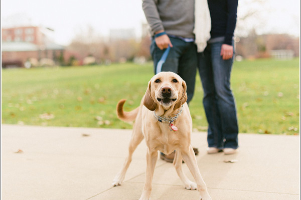 Our best friends - curious canines and engagement sessions
